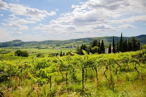 Massimago Wine Relais - Biblioteca Mezzane di Sotto - blog - 1--- (1)